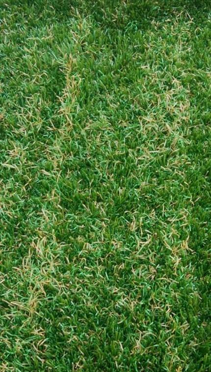 人工芝 拡大